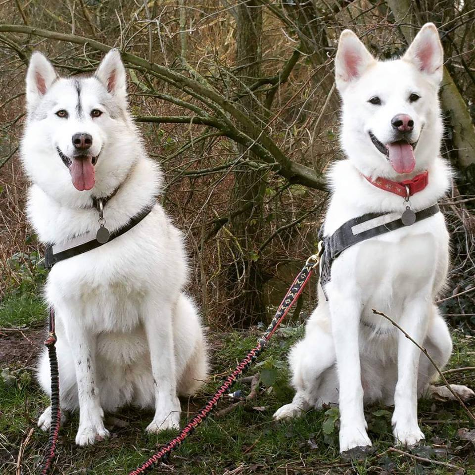 Narla and Sasha - Year of the dog