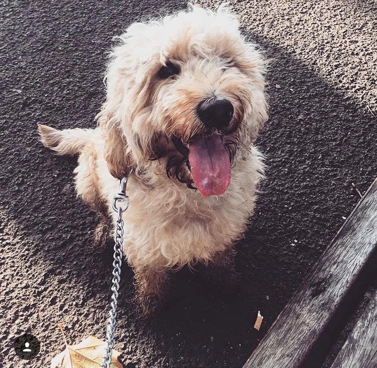 Ernie - Dogs of Signature
