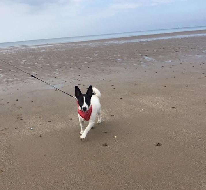 Nellie - Dogs of Instagram