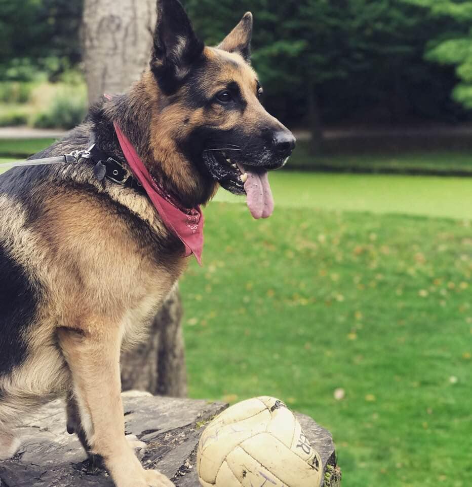 Ralph - Dogs of Signature