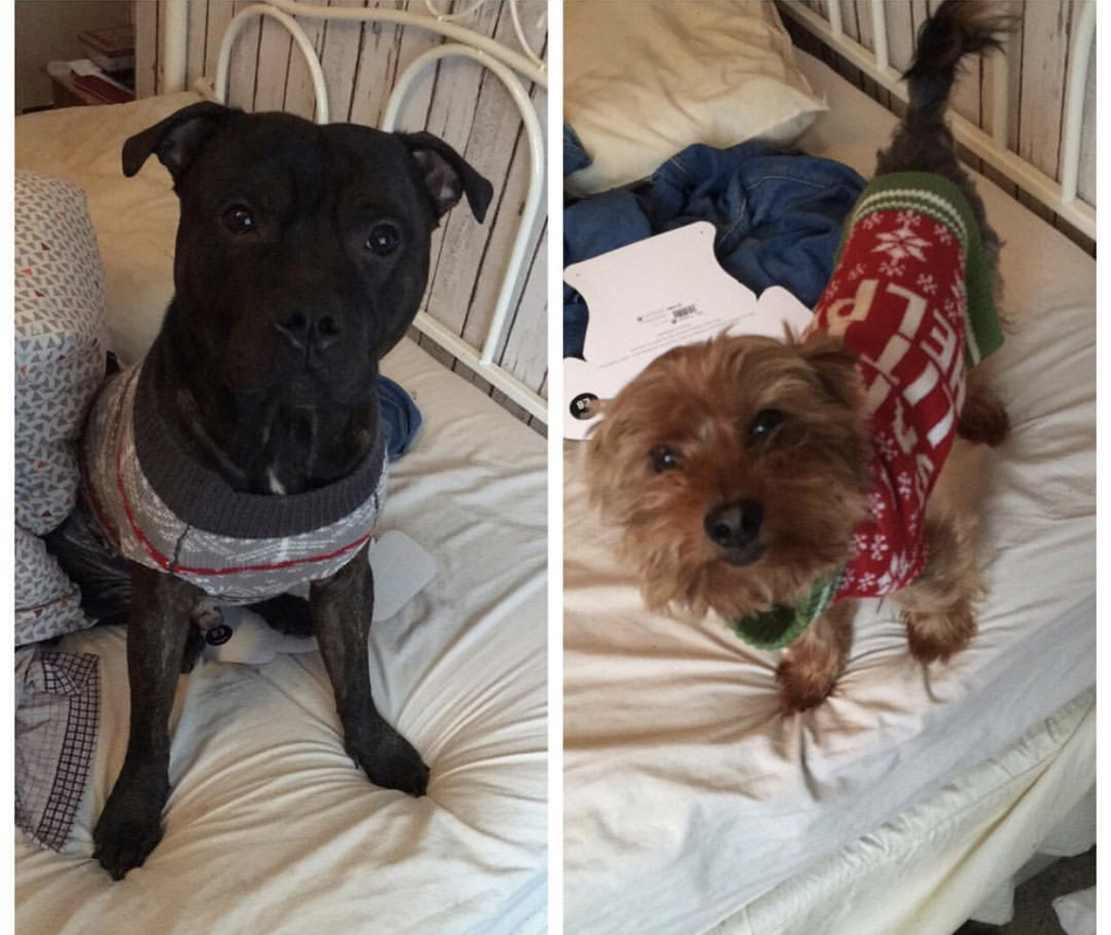 Jimmy and Marley - Dogs of Signature